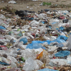 Plastic bags are killing us and polluting our environment